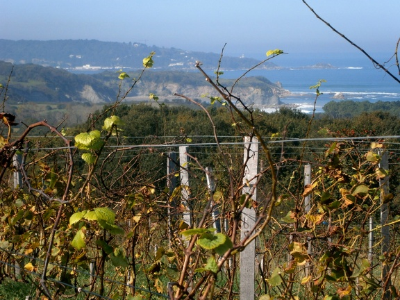 EgiaTegia vignoble basque