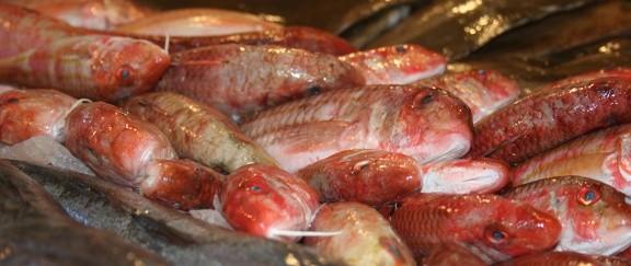 rouget Merlu pêche pays basque