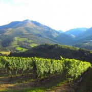 vignoble pyrenees pays basque-irouleguy Erronda evenements
