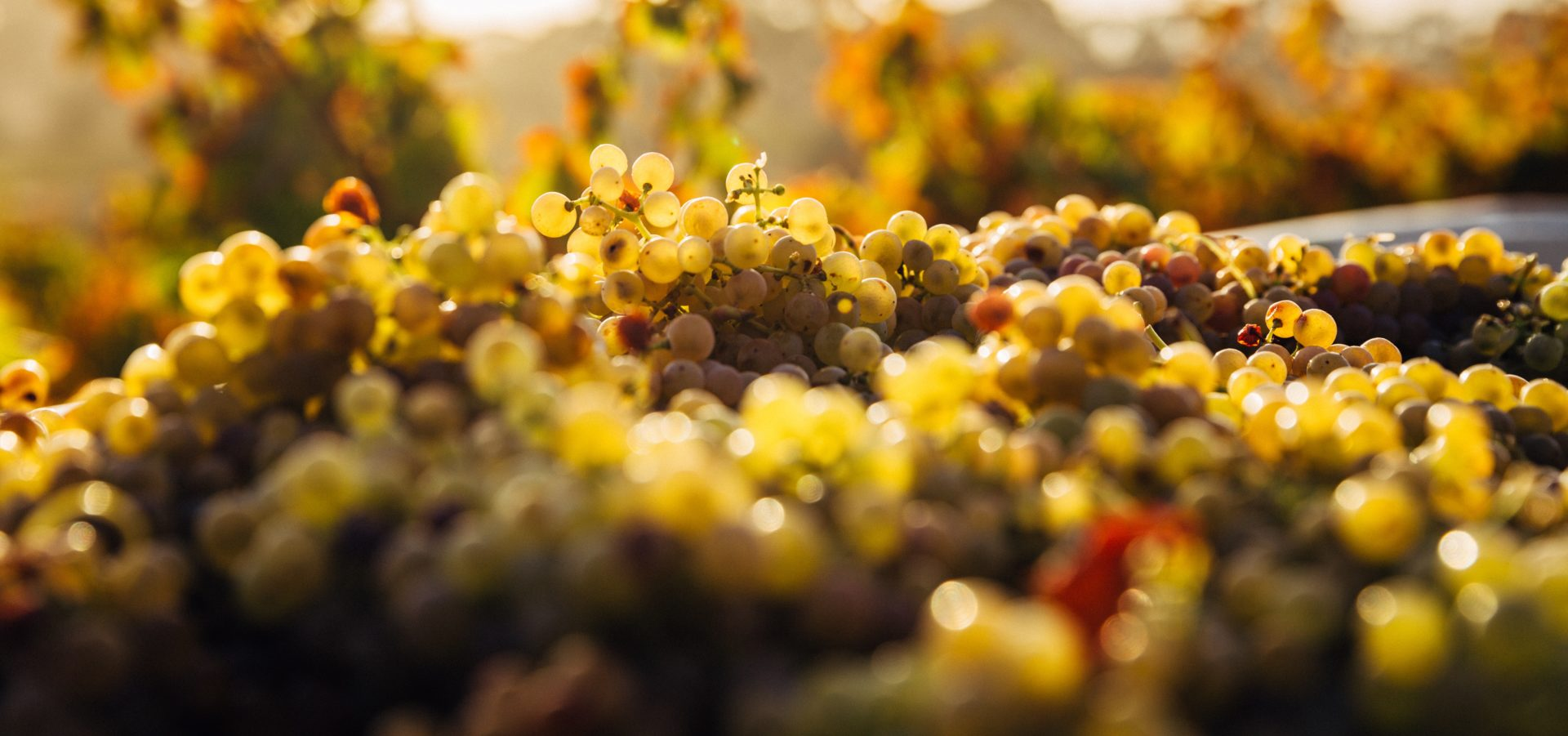 Arnoa Vuelta – Basque wine road