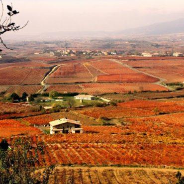 fetes-vendanges-rioja-logrono-vin-agence-de-voyage-erronda-visite-bodega-degustation-viticulteur-oenotourisme-marques-de-riscal