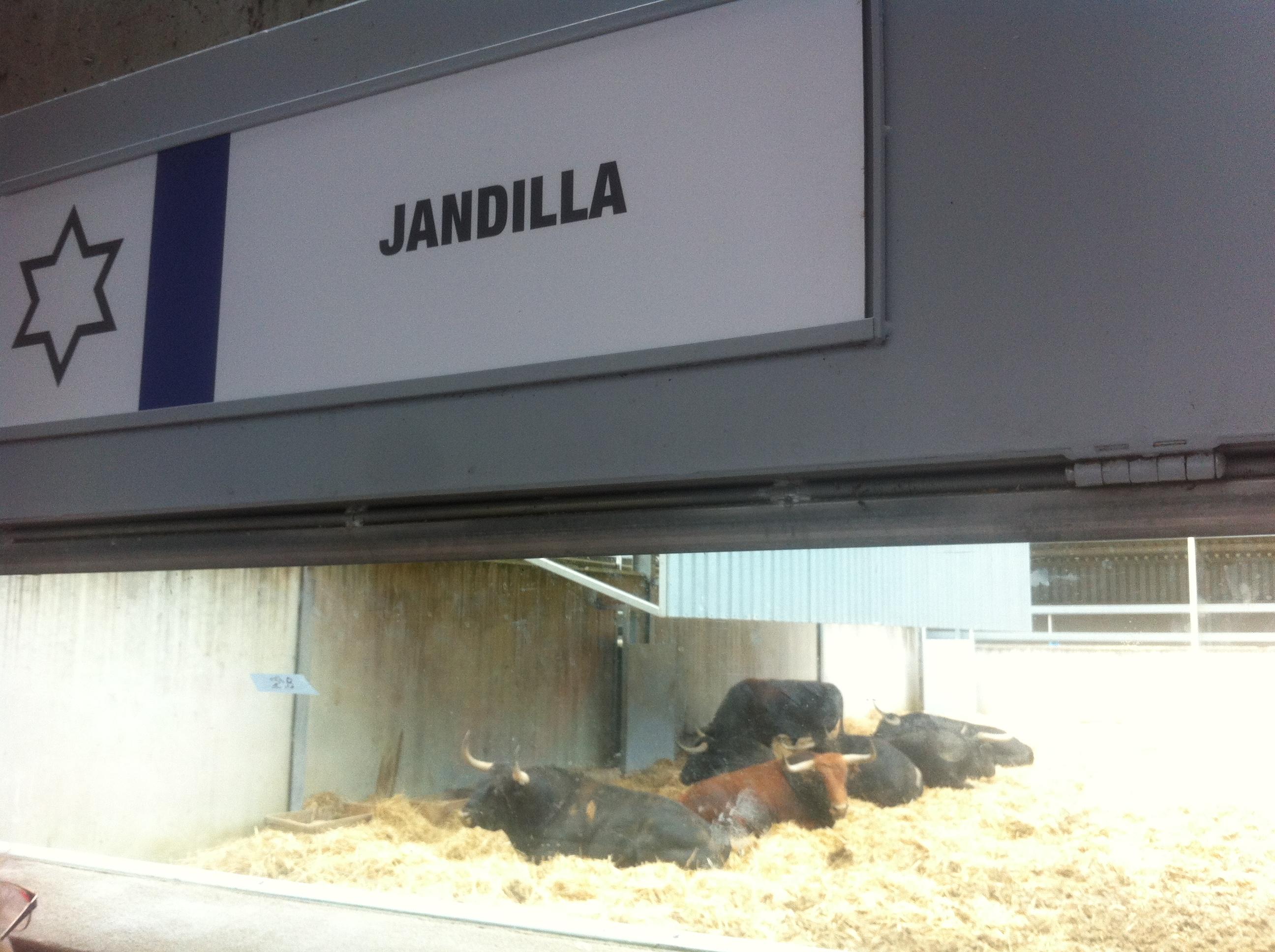 san-fermin-pamplona-visite-ganaderia-jandilla-pampelune-le-cercle