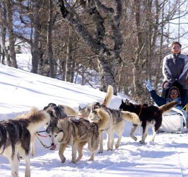 Séminaire Pyrénées Neige ski chien de Traineau Erronda