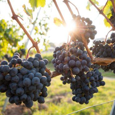 agence voyage pays basque erronda sejour stay detente evasion saint jean de luz rioja espagne vendanges san Mateo wine vino vin bodega degustation