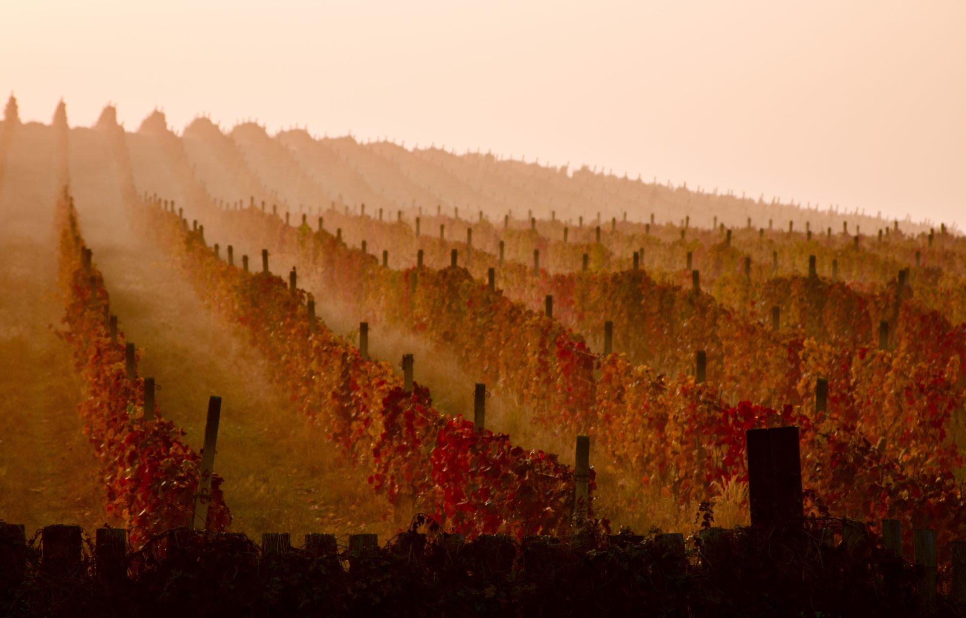 Ruta del vino en la Rioja